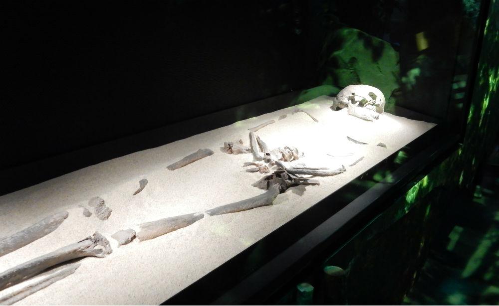 Skelet van Trijntje (Historiek)