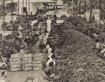 Suikerfabriek in Indie, 1913 (Commonswikimedia/ KITLV)