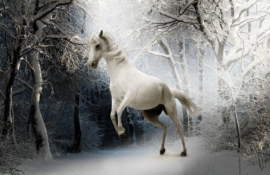 Een wit voetje halen (cc - Pixabay - Sponchia)