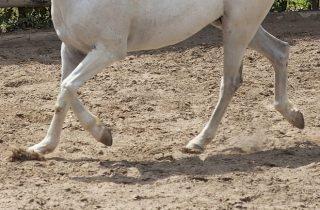 Witte paardenvoeten (cc - Pixabay - Engin_Akyurt)