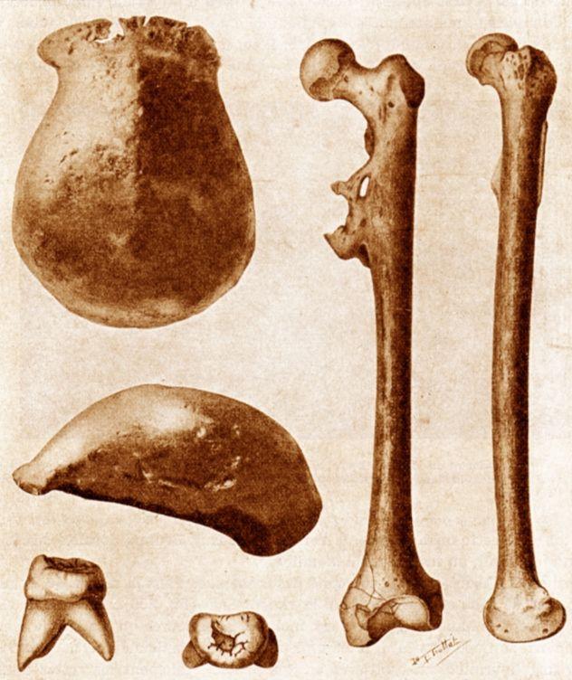 Tekening van Dubois' vondsten van de javamens: molaren, dijbenen en een schedeldak.