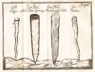 De gevreesde paalworm volgens een pamflet uit 1733