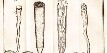 Paalworm vrat de dijken stuk