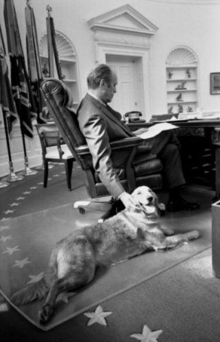 Gerald Ford met zijn golden retriever in het Oval Office, 1974 (Gerald R. Ford Presidential Library)