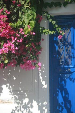 Het kenmerkende blauw (Foto Natascha Neef - Parakalo)