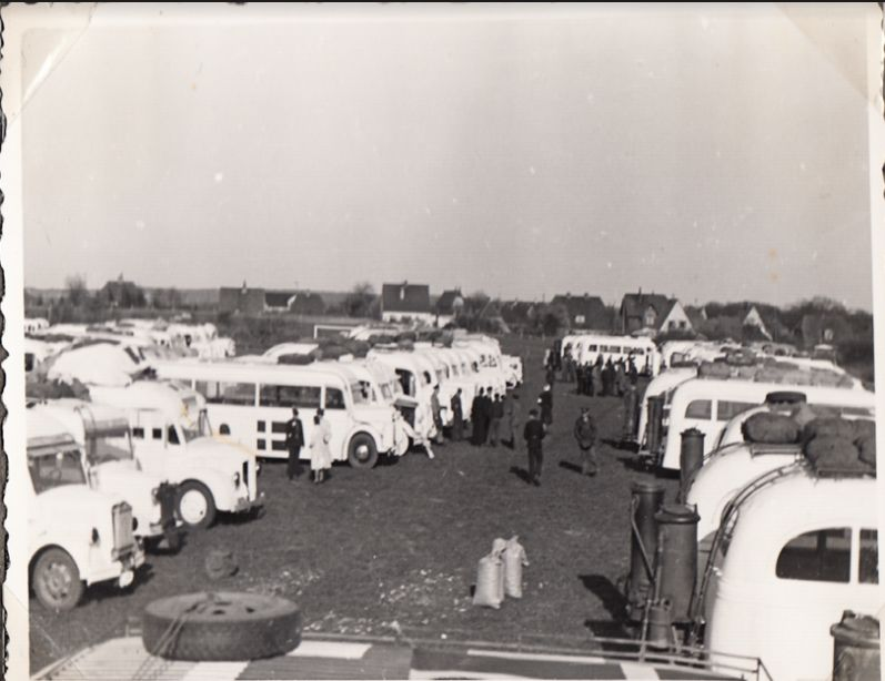 Aankomst van witte bussen in Padborg (foto collectie Museum Kamp Frøslev)