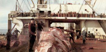 De traanjagers – Herinneringen van naoorlogse walvisvaarders