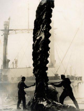 Twee walvisvaarders bewerken elk aan een kant de ribbenkast van een walvis met scherpe flensmessen.