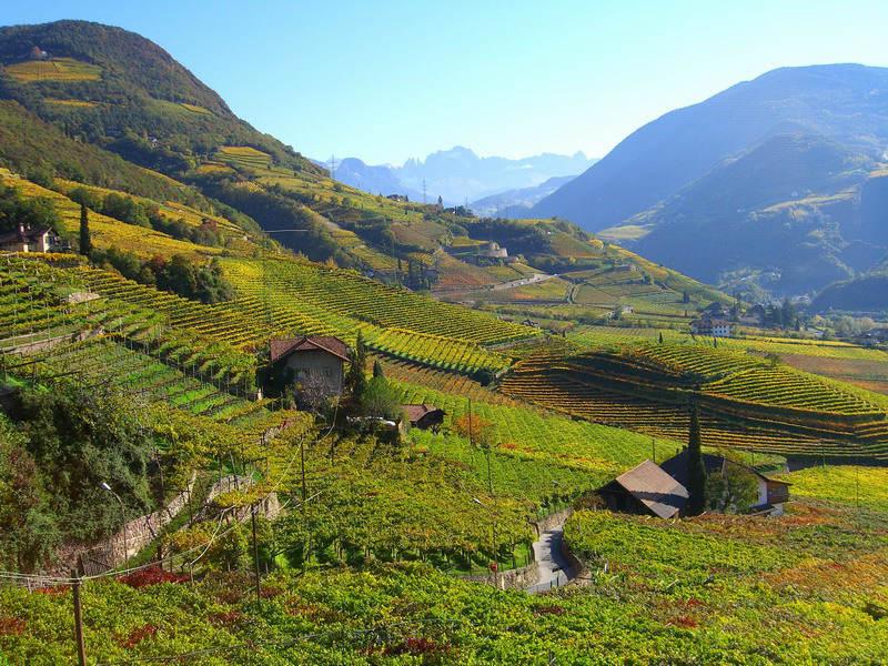 Wijngaarden in Zuid-Tirol (CC BY-SA 3.0 - wiki - Christian Rottensteiner)