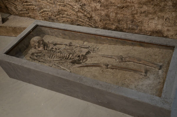Skelet van een man uit Ezinge (Museum Wierdenland)