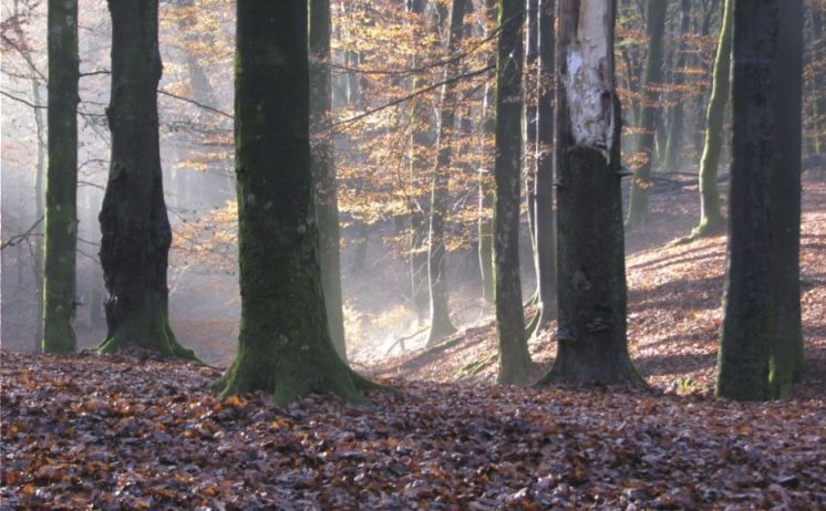 Het Solse Gat in het Speulder- en Sprielderbos, Garderen (CC BY-SA 4.0 - K.Vliet - wiki)