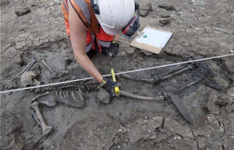 Het skelet van de man op de vindplaats (MOLA)