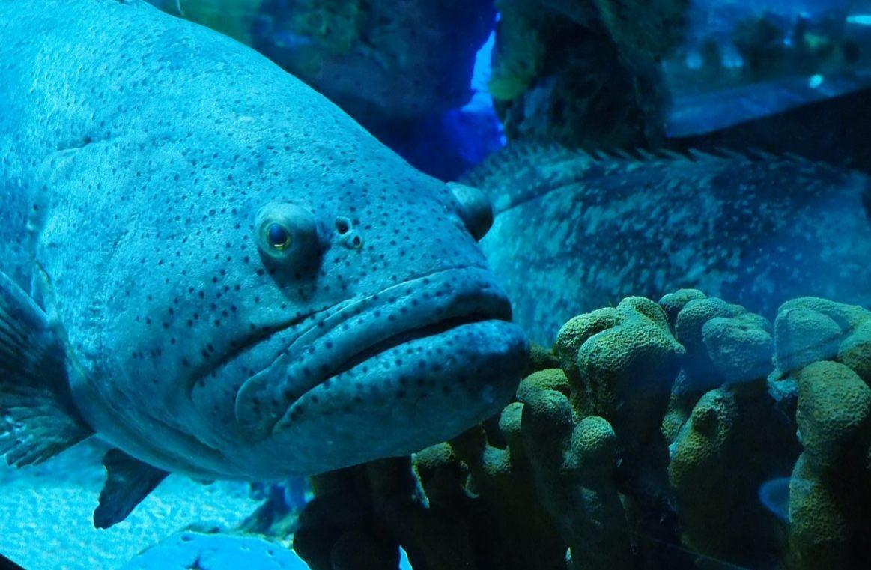 Sikkeneurig, ook vissen lijken het soms te zijn... (CC0 - Pixabay - Ayre13)