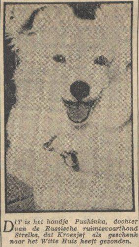 Pushinka - De Volkskrant,  22-06-1961(Delpher)