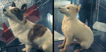 Belka en Strelka, twee hondjes in de ruimte