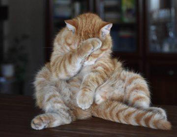 Jeremiëren - Ook katten zit het soms niet mee... (CC0 - Pixabay - skorchanov)