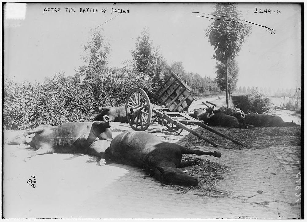 Paarden na de Slag der Zilveren Helmen (Publiek Domein - wiki)
