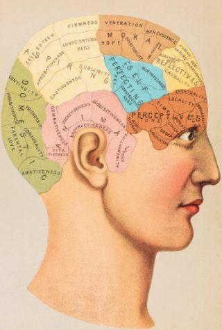 Schedelkaart met de locatie van verschillende eigenschappen in het brein.  Bron: De hersenverzamelaar