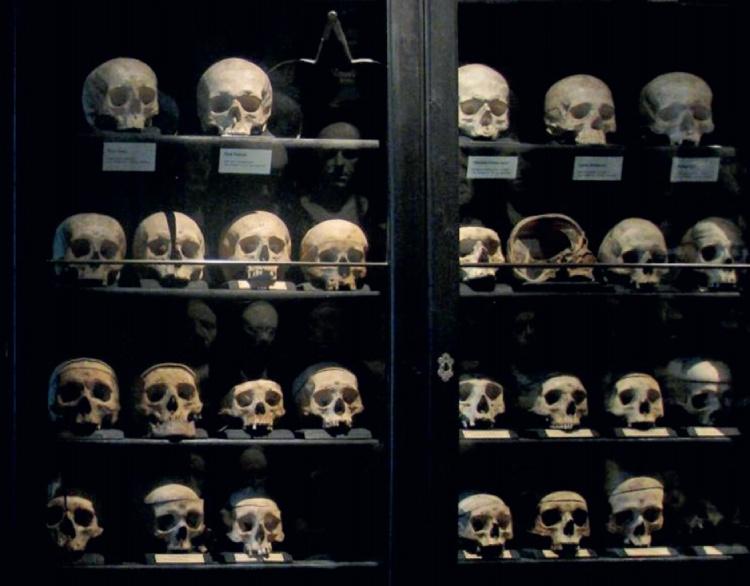 Een klein deel van de schedelverzameling van Gall in het Rollettmuseum, Baden bei Wien.