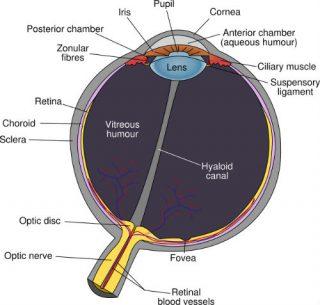 Diagram van het oog