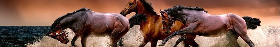 Dieren - Paarden (CC0 - Pixabay - ATDSPHOTO)