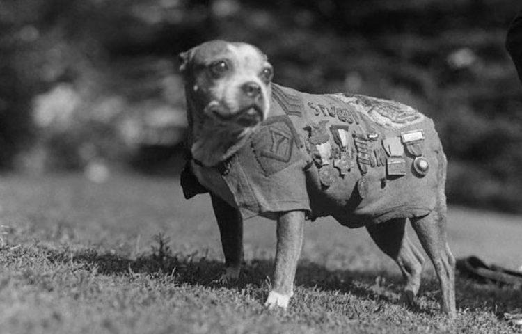 Sergeant Stubby (Publiek Domein - wiki)