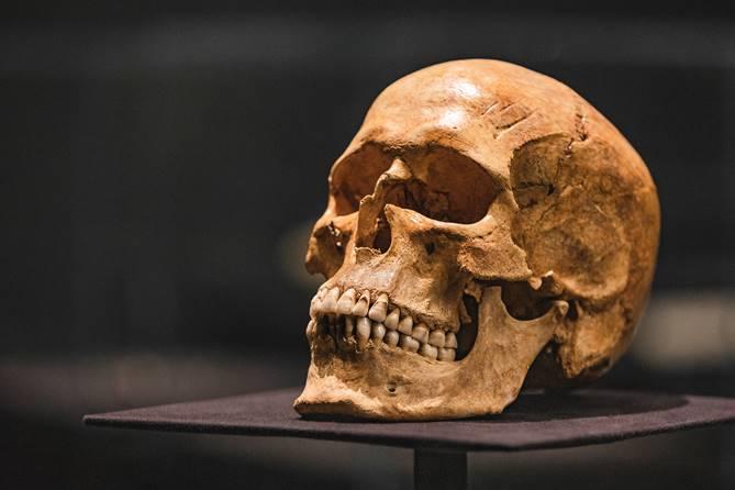 Schedel met gevijlde tanden, 9de - 11de eeuw, gevonden in Gotland, been, bruikleen Gotlands Museum, Visby, Zweden. Foto: Ruben van Vliet / Fries Museum