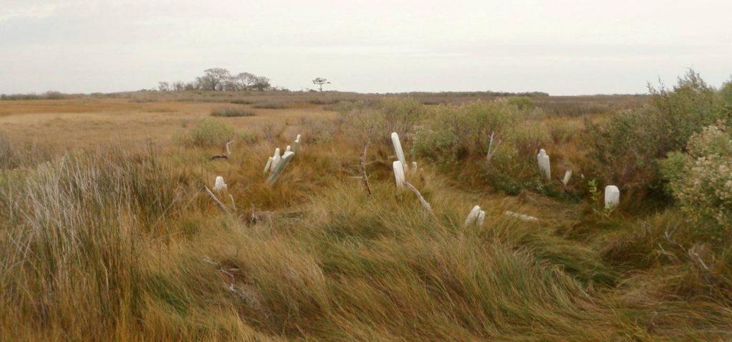 Verlaten begraafplaats van Holland Island, november 2010