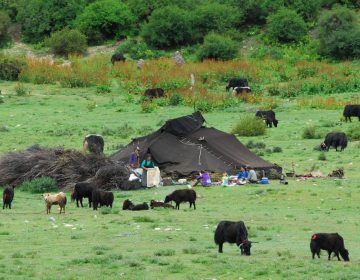 Nomaden in Tibet