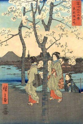 Kersenbloesem op een negentiende-eeuwse Japanse prent van Hiroshige