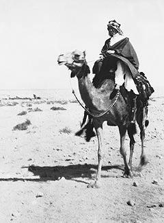T. E. Lawrence op een kameel bij Akaba, Jordanië, 1917