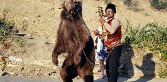 Dansende Beren – Heimwee naar het communisme