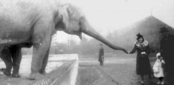 Poolse dierentuin verborg tientallen Joden