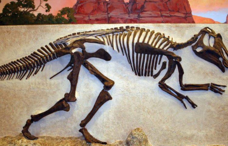 Paleontologie - Skelet van een dinosaurus