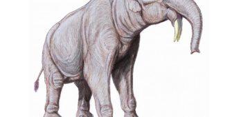 Het einde van de megafauna