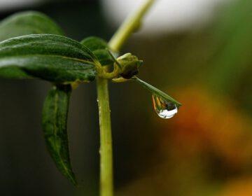 Regen na droogte: Petrichor