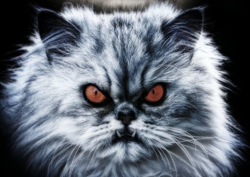 Demonische kat