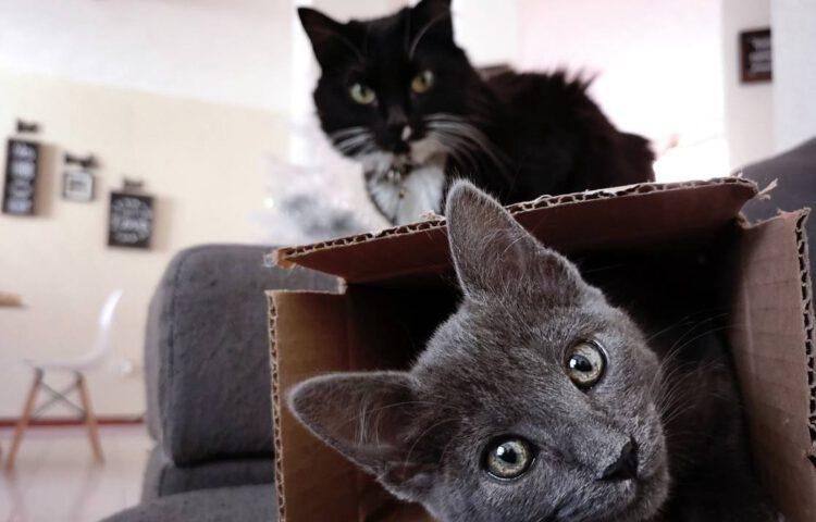 Kinnesinne - Jaloezie is ook katten niet vreemd