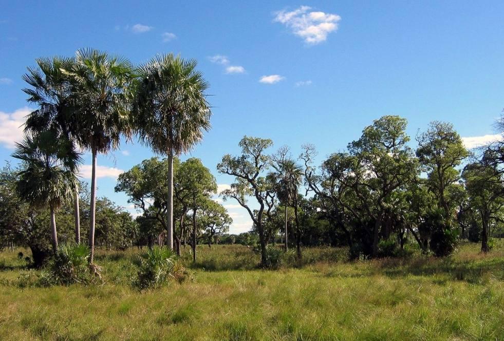 Landschap in de Gran Chaco