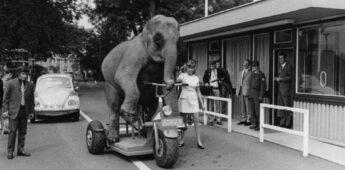 Olifanten, een beestig verhaal