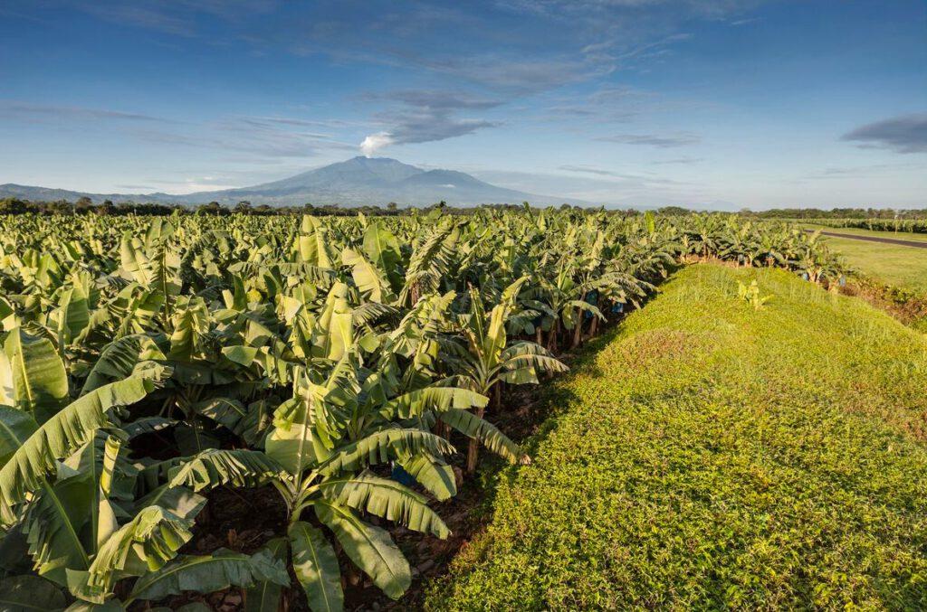 Bananenplantage van Chiquita in Costa Rica. Op de achtergrond de vulkaan Turrialba
