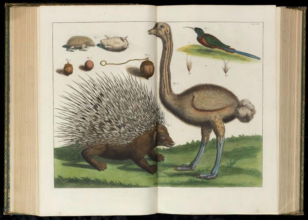 Afbeelding van een struisvogel