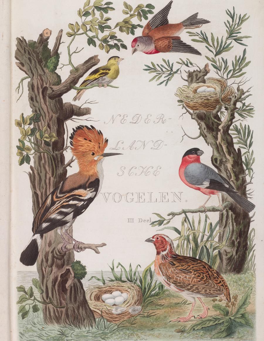 Titelprent van deel drie van 'Nederlandsche Vogelen'