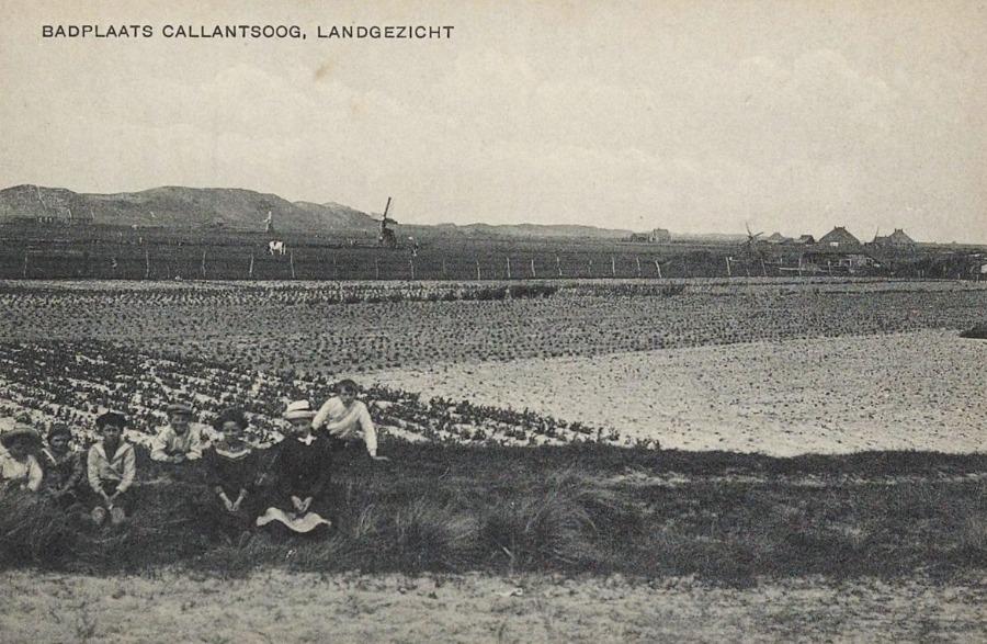 De Noordduinen op de achtergrond – Historische Vereniging Callantsoog