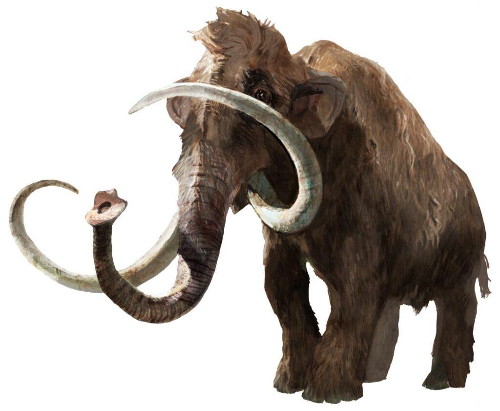 De wolharige mammoet, die waarschijnlijk 40.000 jaar geleden uitgestorven is,  leefde ook op Doggerland.