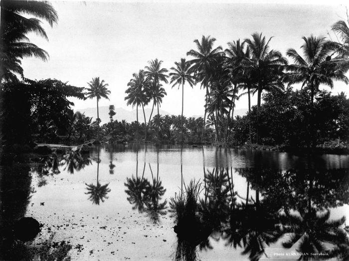 Oost-Java visvijver van Grissee