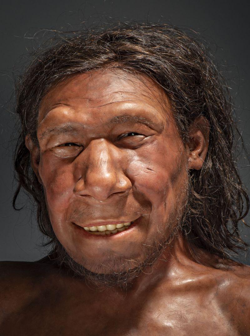 De gezichtsreconstructie van Krijn, de oudste  Neanderthaler van Nederland (Foto: RMO)