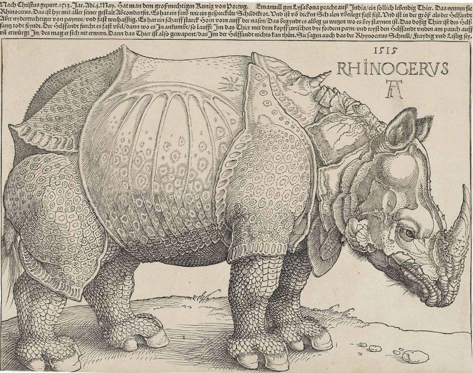 Rhinocerus, houtsnede van Albrecht Dürer uit 1515
