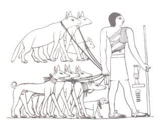 Honden in het oude Egypte