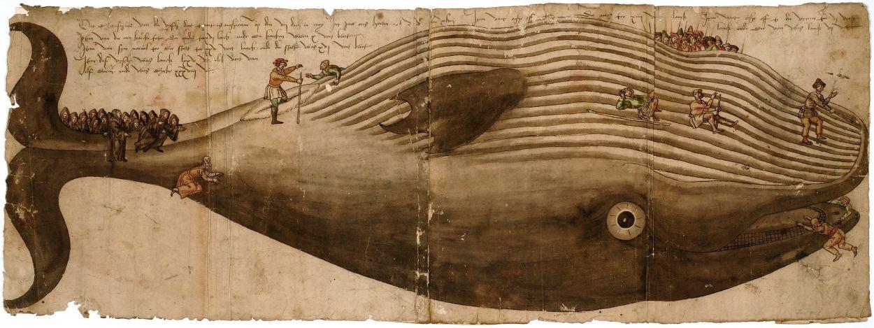 Aangespoelde vinvis te Egmond, 1547
